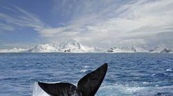 調査捕鯨の中止命令 「科学目的のためとは言えない」