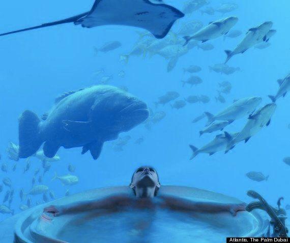 悠々と泳ぐエイを眺めながら...水中スイートルームが竜宮城みたい(画像)