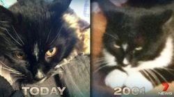 行方不明だった黒猫、13年ぶりに奇跡的な帰宅を果たす