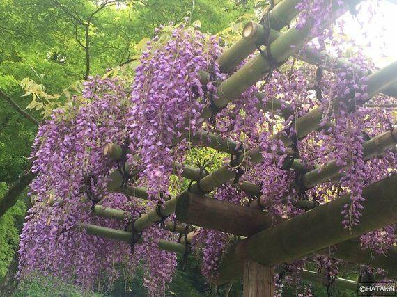 杜若ほころぶ春の園遊会 ~