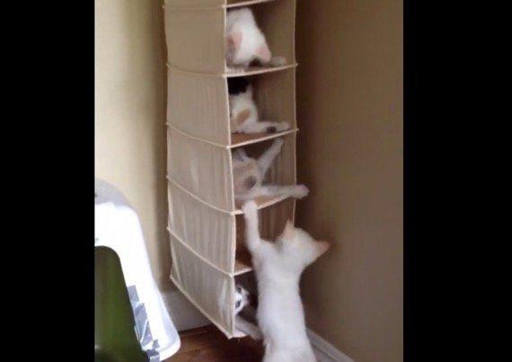 5匹入居の猫マンション、近隣トラブル大発生