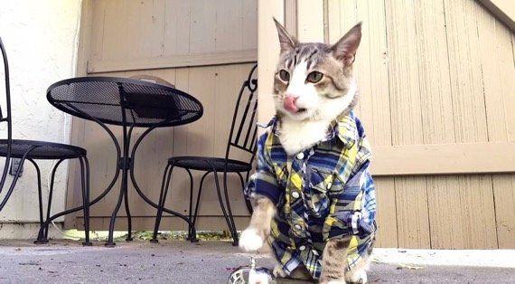 予想に違わずワンモアシング、ベルを鳴らしておやつを得る猫