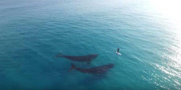 パドルボードを漕いでいたら、2匹のクジラと遭遇した【動画】