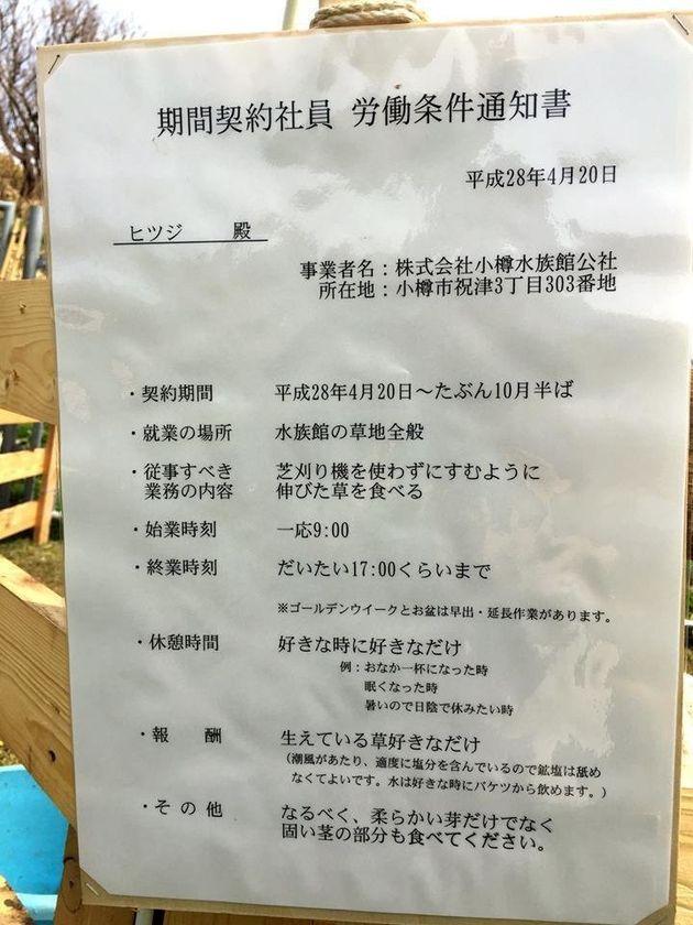 おたる水族館、ヒツジ2頭を契約社員に 好待遇な「労働条件通知書」がネットで話題