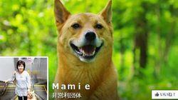 阪急百貨店内で聴導犬の同伴入店を拒否 HPで謝罪