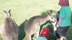 オーストラリアで子育てとクラウドソーシングのお仕事を両立