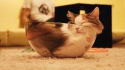 透明ボウルに眠る猫、猫の流体説を示す強力な事例に