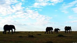 象牙と犀角 縮小する日本の市場について報告