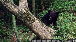 人とクマの共存を実現、広がっていた島根県匹見町の住民の理解