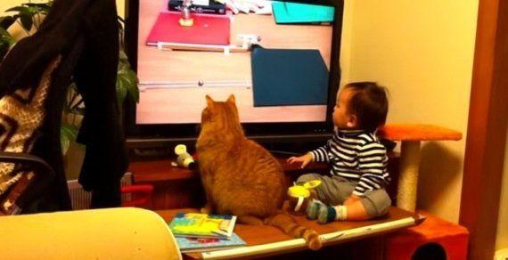 ピタゴラ装置を見入る猫と男の子、自らも装置の一部になる