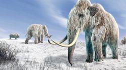 「マンモスを2年以内に再生できる」と表明 絶滅動物の復活に批判の声も