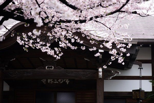声明、ゴスペル、スーフィー音楽......世界の宗教音楽から考える、日本の文化とは何か