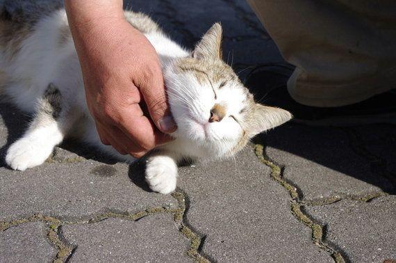 「ネコは地球を救う」だからまずは猫を救う!~ネコ市ネコ座ってなんだ?~