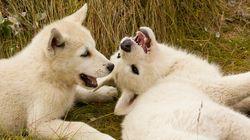 犬が仰向けに寝転がるのは、あなたに服従しているわけじゃない。じゃあ何?(研究結果)