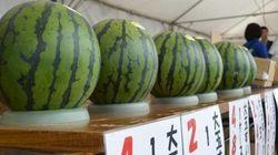 熊本市長「例年ならスイカの出荷が最盛期を迎える時期」