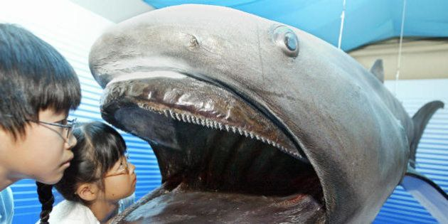 SIZUOKA, JAPAN: Children peer into a stuffed specimen of a 4.2-meter-long megamouth shark at Tokai University...