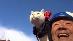 リトルカブ乗りの白猫、じいちゃんの肩で颯爽と風になる