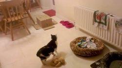 一瞬で姿を隠す、イリュージョニストの子猫現る