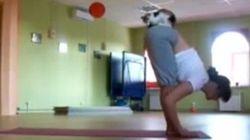三毛猫、お姉さんとヨガをする【動画】