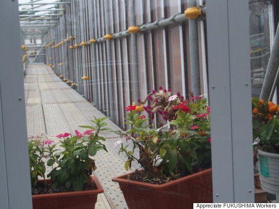 福島第一原発 事務棟建設場の花に何を見る