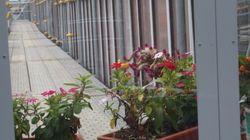 福島第一原発、事故前にはなかった花に何を見る?