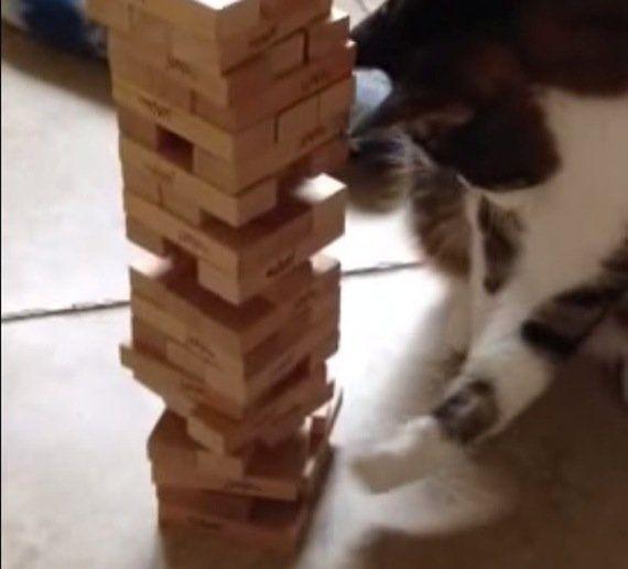 ジェンガで遊ぶ猫、華麗に4コンボを決める