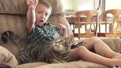 勇敢なメス猫「タラ」、強烈なタックルで4歳の少年を救出
