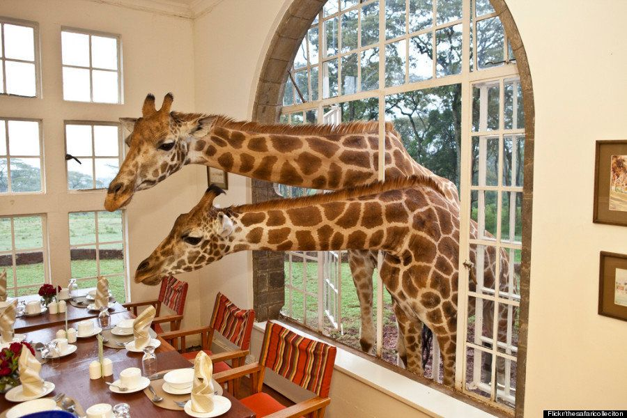 キリンと一緒に生活できる高級ホテル