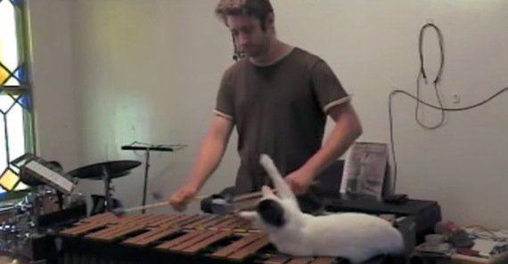ビブラフォンの上に寝そべる猫、予想通りマレットに手を出す