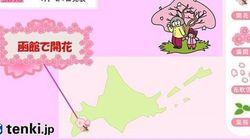 函館でサクラ開花 津軽海峡を越える