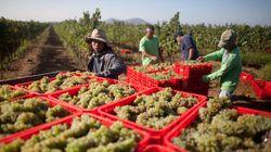 イスラエル:タイ人移住労働者への深刻な人権侵害 農業労働者の保護を