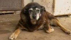 世界最高齢と考えられていた30歳の犬、天国に旅立つ
