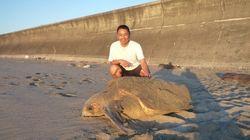 絶滅危惧種アカウミガメを守る