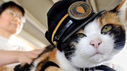 亡くなった三毛猫・たま駅長「天国行きの電車に乗車いたしましたにゃんご!」