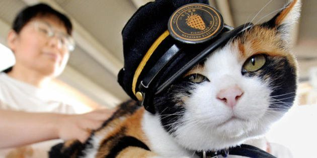 A woman strokes 'Tama', a nine-year-old female tortoiseshell cat wearing a stationmaster's cap of the...