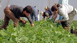 有機農業をすることは、環境にもお財布にも優しい(研究結果)