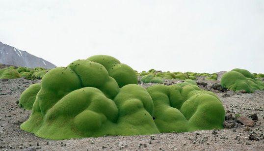 「世界最高齢の植物たち」画像集