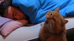 猫目覚ましと犬目覚まし【動画】