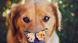 不思議なほど魅力的な「犬たちの肖像」