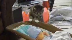 赤ん坊と初対面する猫、おっかなびっくり覗き込む