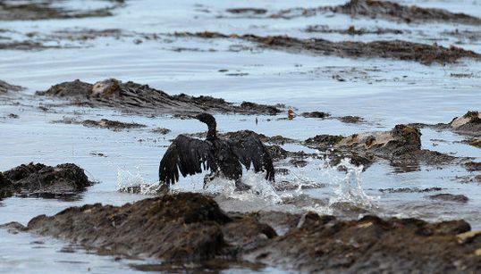 カリフォルニア州でパイプライン破裂、原油流出で海洋生物の生態系に影響も
