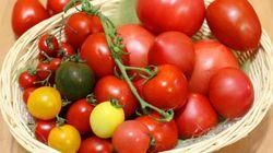 種類がいっぱいで悩むあなたに「トマト」の選び方指南
