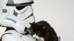 スター・ウォーズの悪役が、捨てられた動物のために立ち上がった(画像)