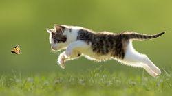 猫たちが春を楽しんでいるよ(画像集)