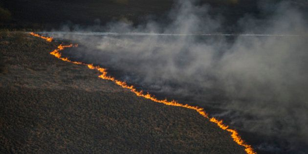A fire strip crosses a forest floor in the Chernobyl area, Ukraine, Tuesday, April 28, 2015, as fire...