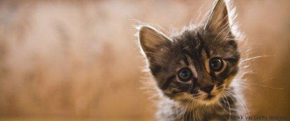「エジプトから来たニャ」子猫の密航者、イギリスの空港で見つかる