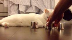 猫はちゃんと見ている。よーく、見ている【動画】