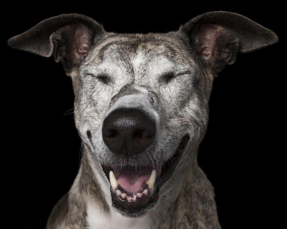 瞑想する犬?