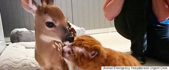 傷ついた動物の赤ちゃんが