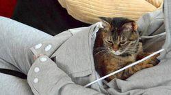 猫や犬が、あなたの腕の中で、眠ってしまう服がありました。(画像)